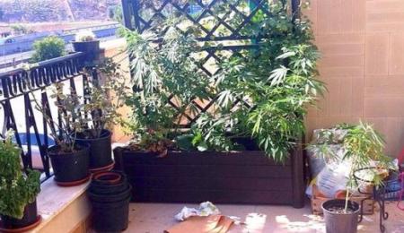 marijuana in balcone