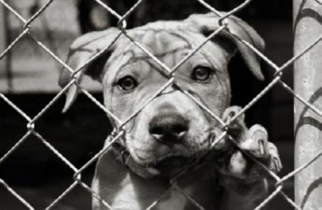 maltrattamento animali
