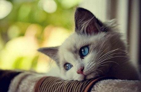 gatto(3)