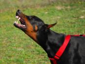 lesioni colpose cane guinzaglio